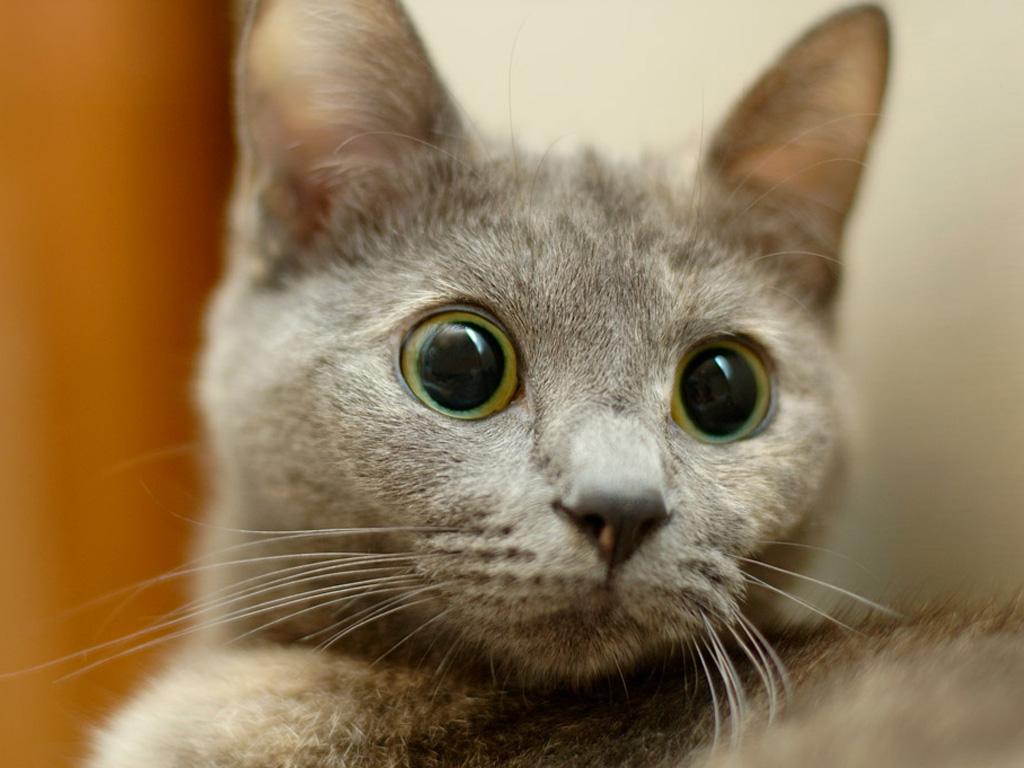 Котенок по имени Порошок