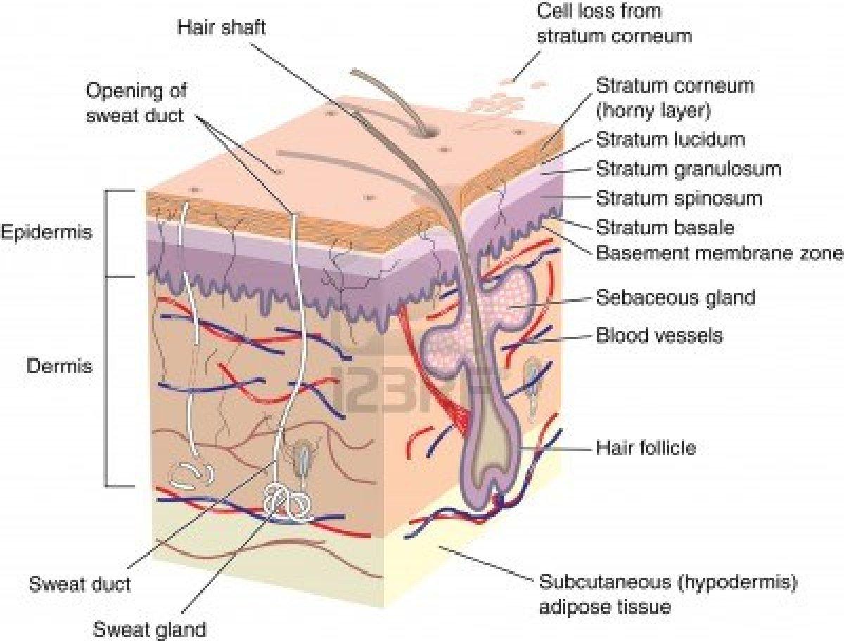 Gambar Rambut Umum