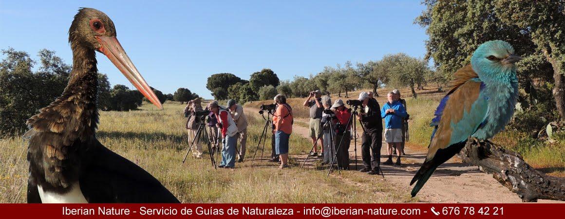 Iberian Nature - Servicio de guías de naturaleza. Birding in Extremadura