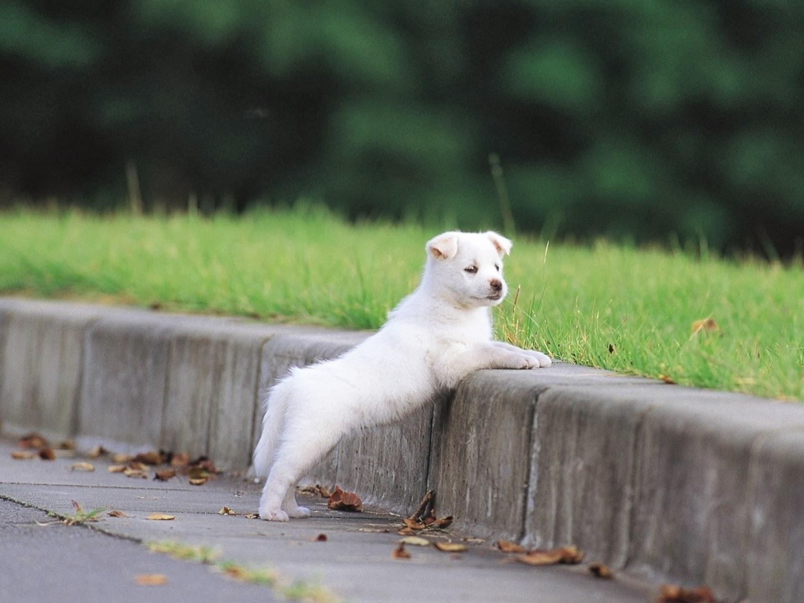 Cachorros acera & hierba