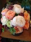 ¡Qué bonitas rosas!