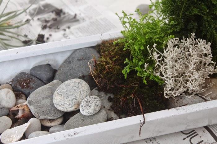las plantas que se emplearon para realizar este pequeo jardn son la plantita gris lawsoniana el pequeo ciprs