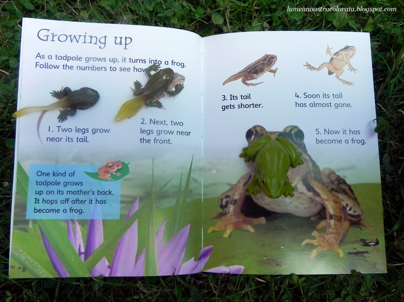 Tadpoles and Frogs, editura Usborne