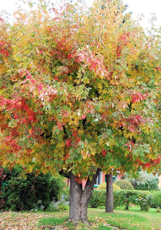 otoño multicolor