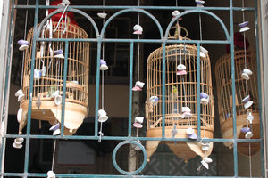Bird cages at a local house