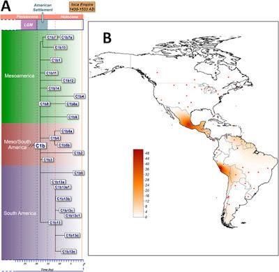 C1b haplogroup map in America