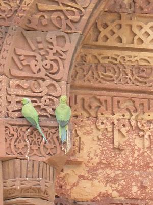 Delhi Qutub Minar parrots on arch