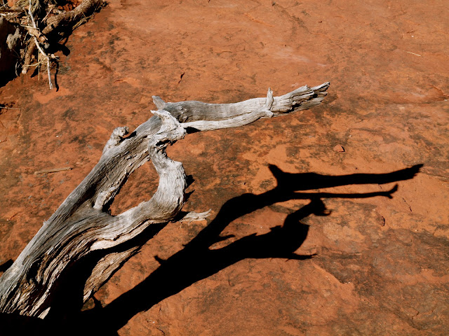 Bell Rock driftwood in Sedona