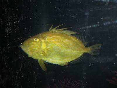 animales-raros-peces-raros