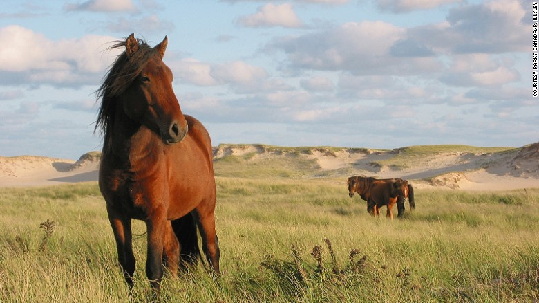 Sable Island National Park Reserve