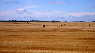 Farm fields with round strawbales