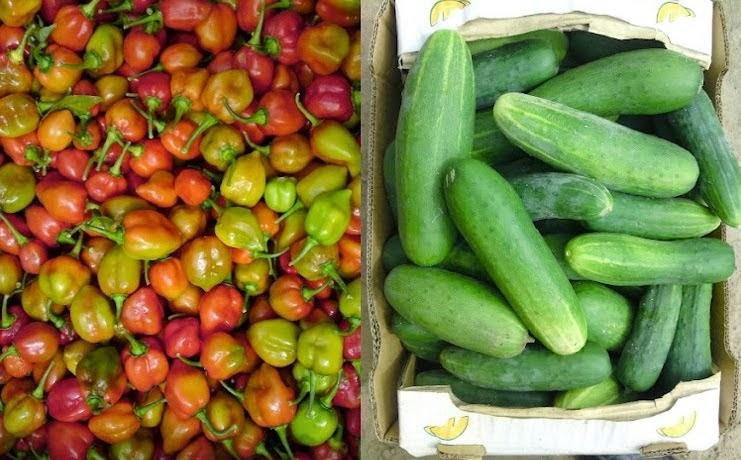 L'agriculture biologique au Sénégal se développe