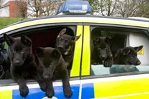 Puppies in police car