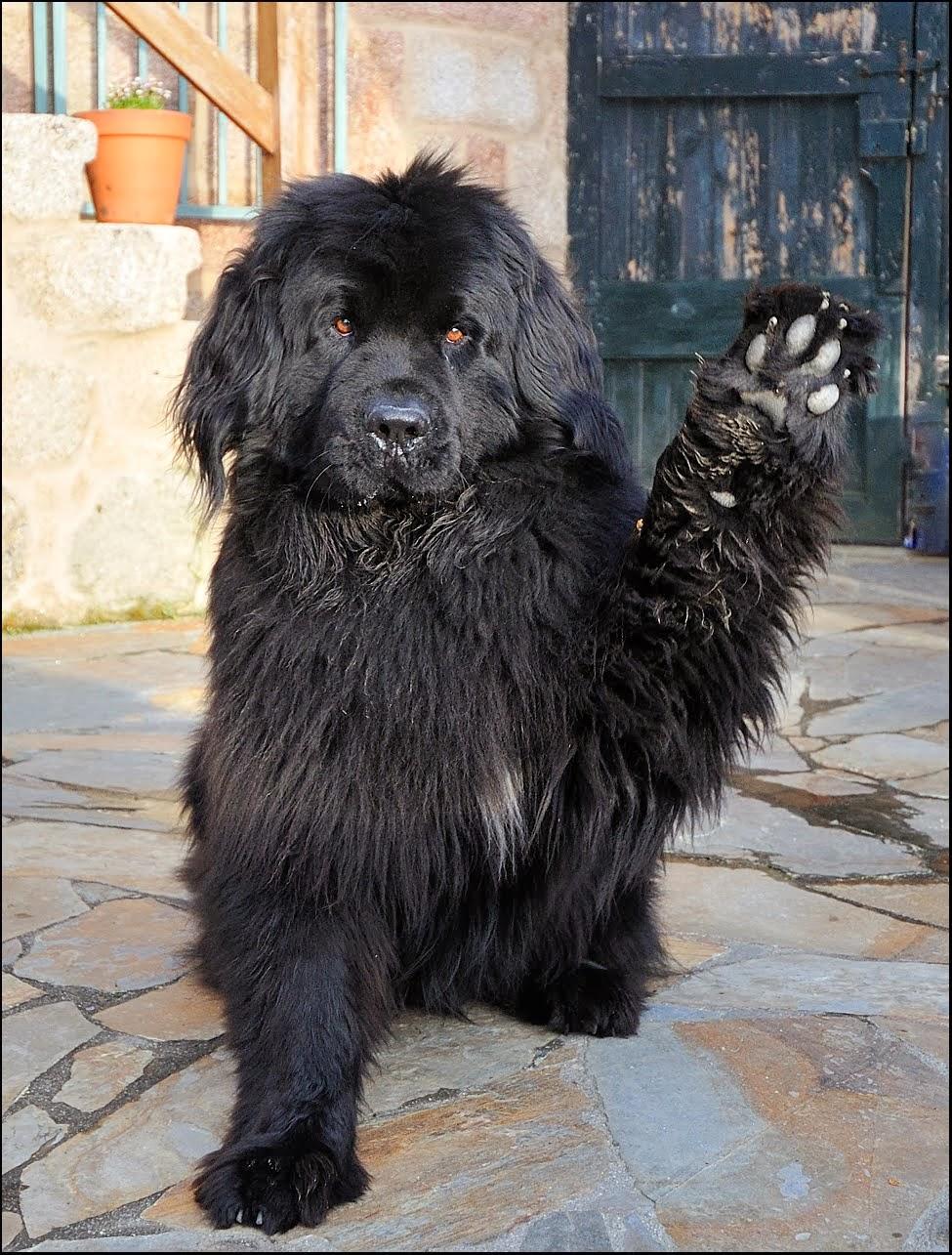 Decálogo del perro viajero