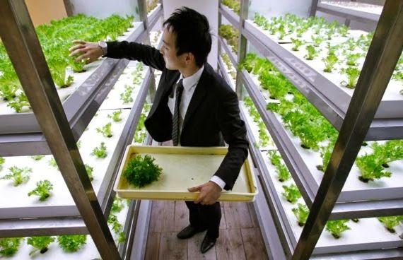 peluang-usaha-di-rumah-bertanam-sayur-sistem-hidroponik