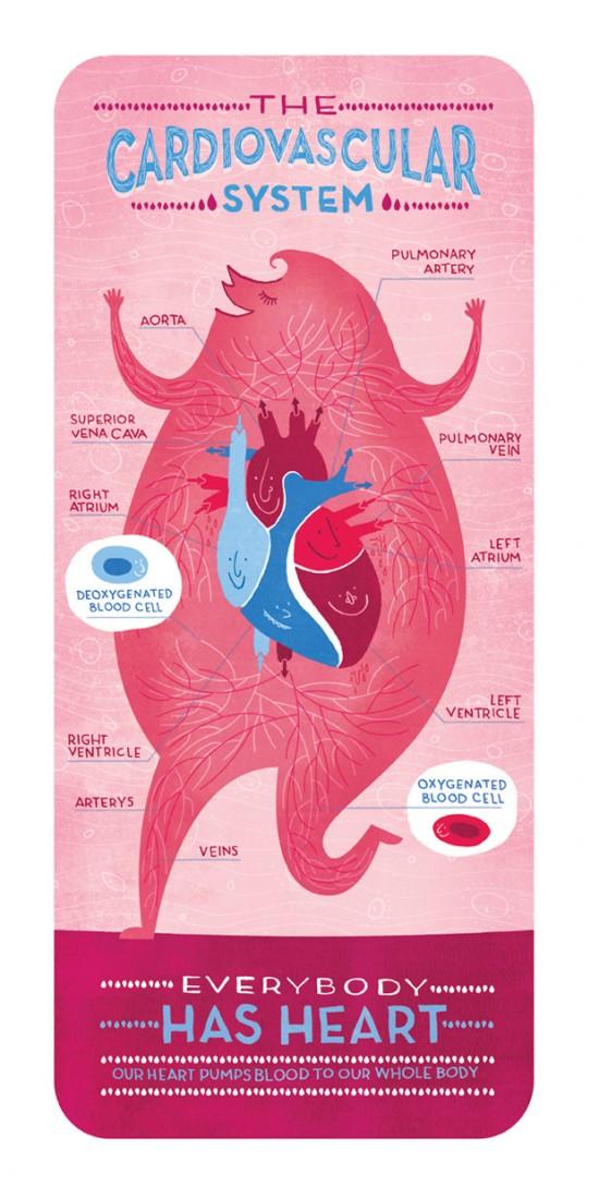 LA CIENCIA DE LA VIDA: Carteles anatómicos de Rachel Ignotofsky