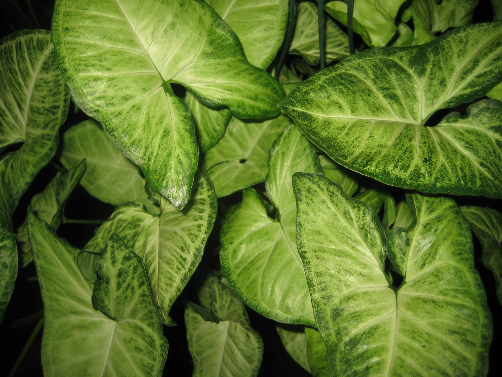 photograph by paul gellatly - Identifying Common House Plants