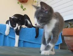 Alfie & Amelie