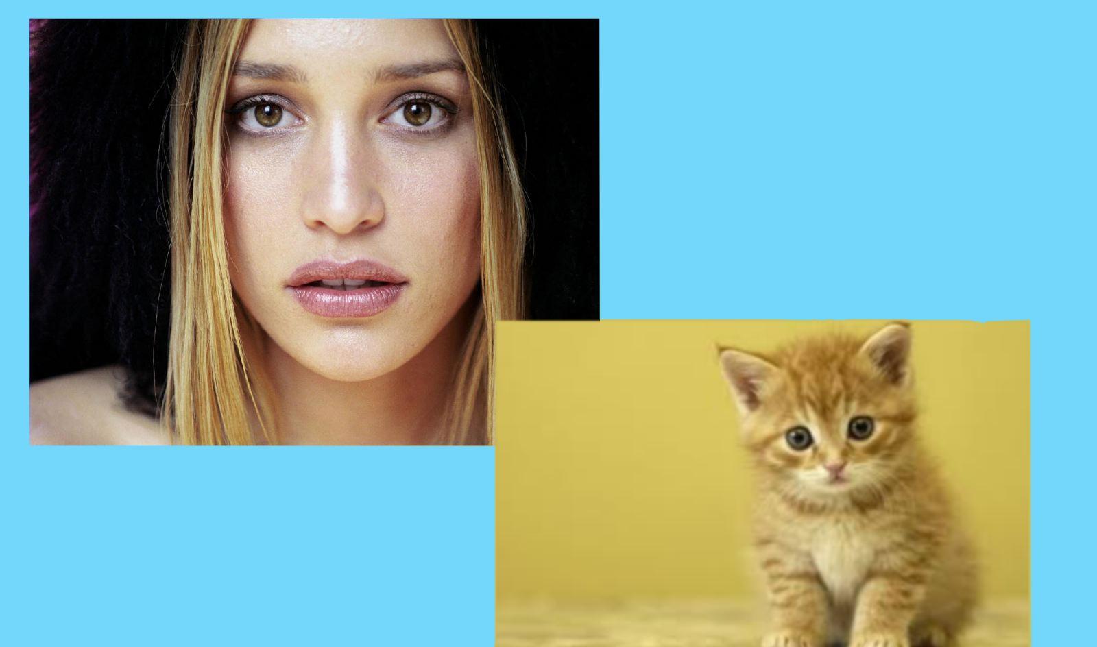 http://1.bp.blogspot.com/-37ZFQr4AXrU/UQwbPwR5-4I/AAAAAAAAGtQ/S_7wDywT43U/s1600/piper+and+kitten.jpg