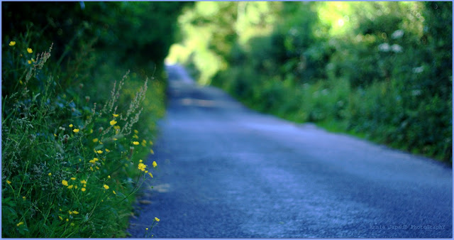 road, blue, light, flowers, green,  Summer light © Annie Japaud Photography 2013