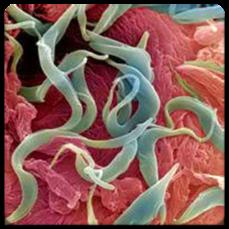 признаки паразитов в организме человека диагностика