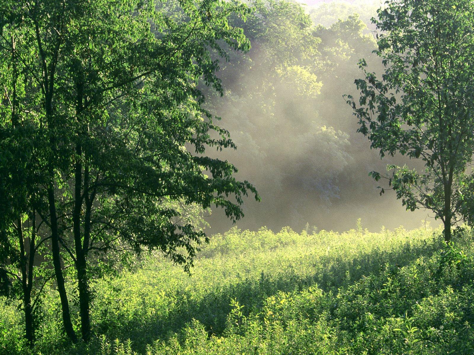 foto foto pemandangan hutan yang alami ukuran besar