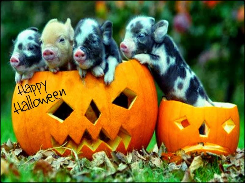 Funny happy halloween wallpaper pictures photos festival chaska - Funny happy halloween wallpaper ...