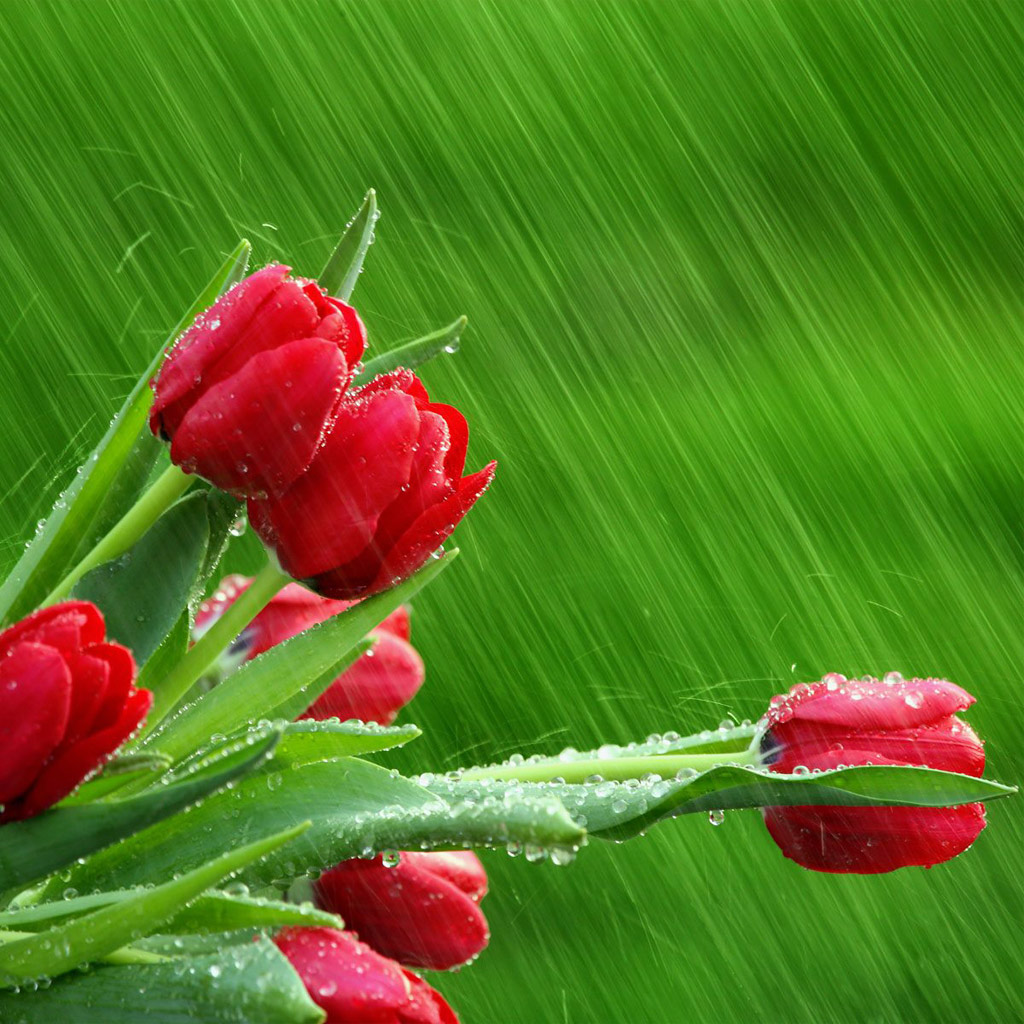Beautiful Flowers With Rain Water Drops Cinipictures
