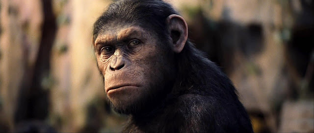 Rise of the Planet of the Apes Wallpaper 6