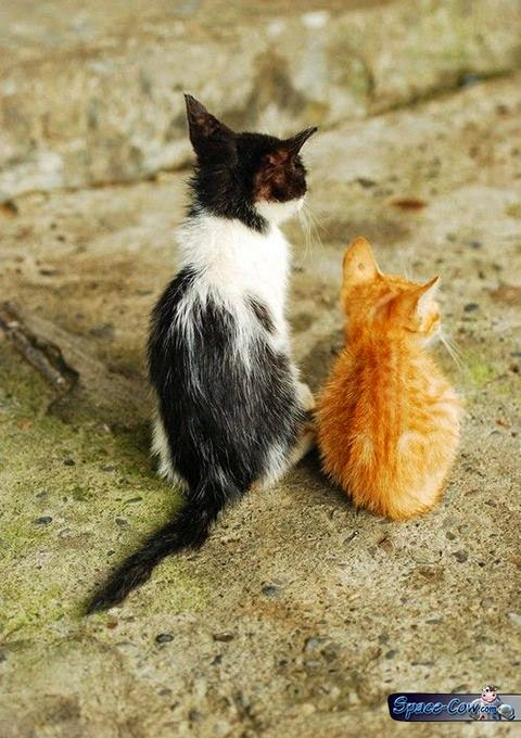 funny kittens picture humor