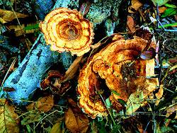Fungus.
