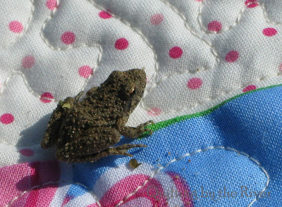 frog on quilt