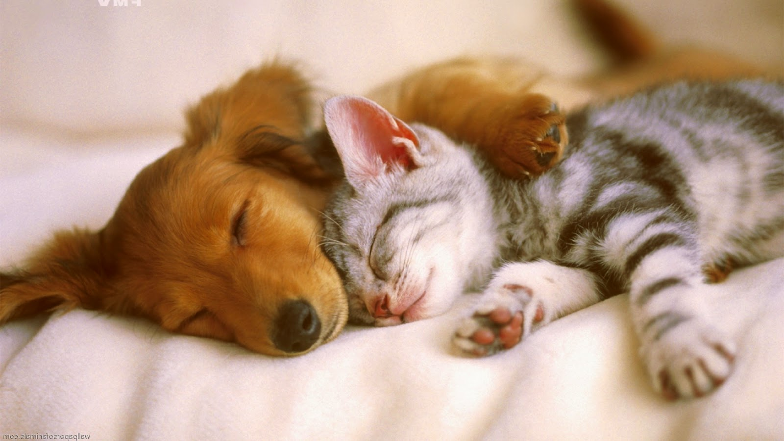 "Oct. 25 seminar by Dr. Kerry Muhovich: ""Cats + Dogs Living Together ..."