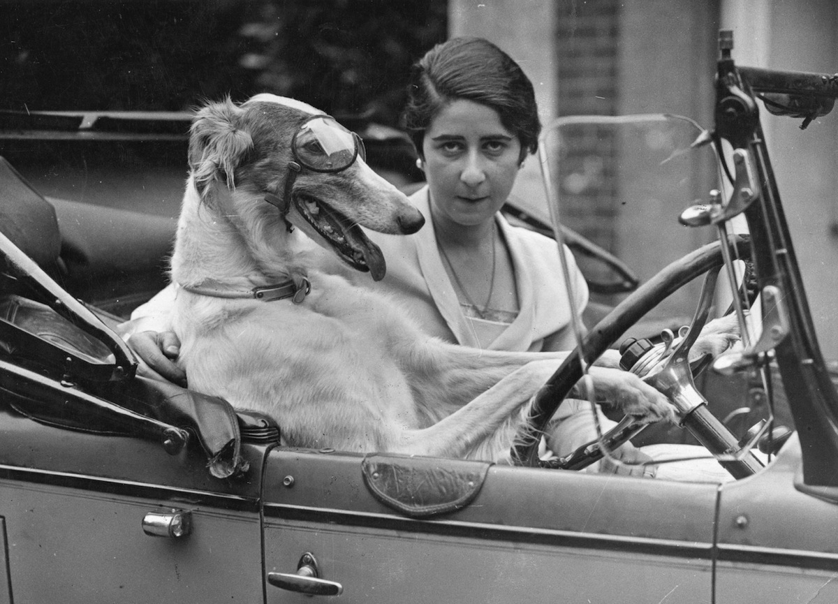 40 Amazing Historical Pictures - Some of the best vintage pictures from history feature animals acting as intelligent as humans.