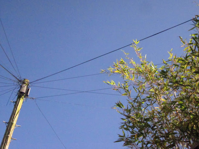 telelgraph pole, wires, and bamboo