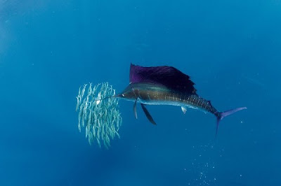 Costa rica fishing calendar for Costa rica fishing calendar
