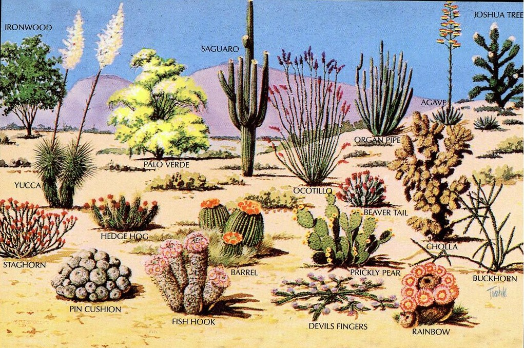 desert ecosystem Mojave desert biome ecosystems an ecosystem is a biotic community together with its physical environment, considered as an integrated unit implied within this.