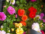 DICK'S FLOWER FESTIVAL