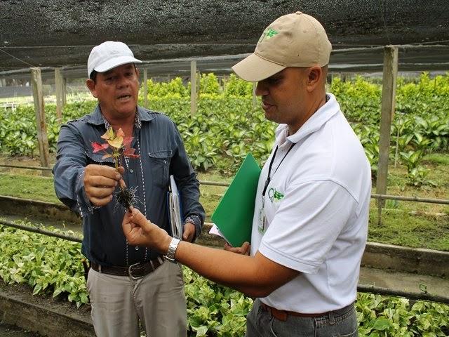 Colombia el ica hace un llamado a los viveros para que for Viveros del valle