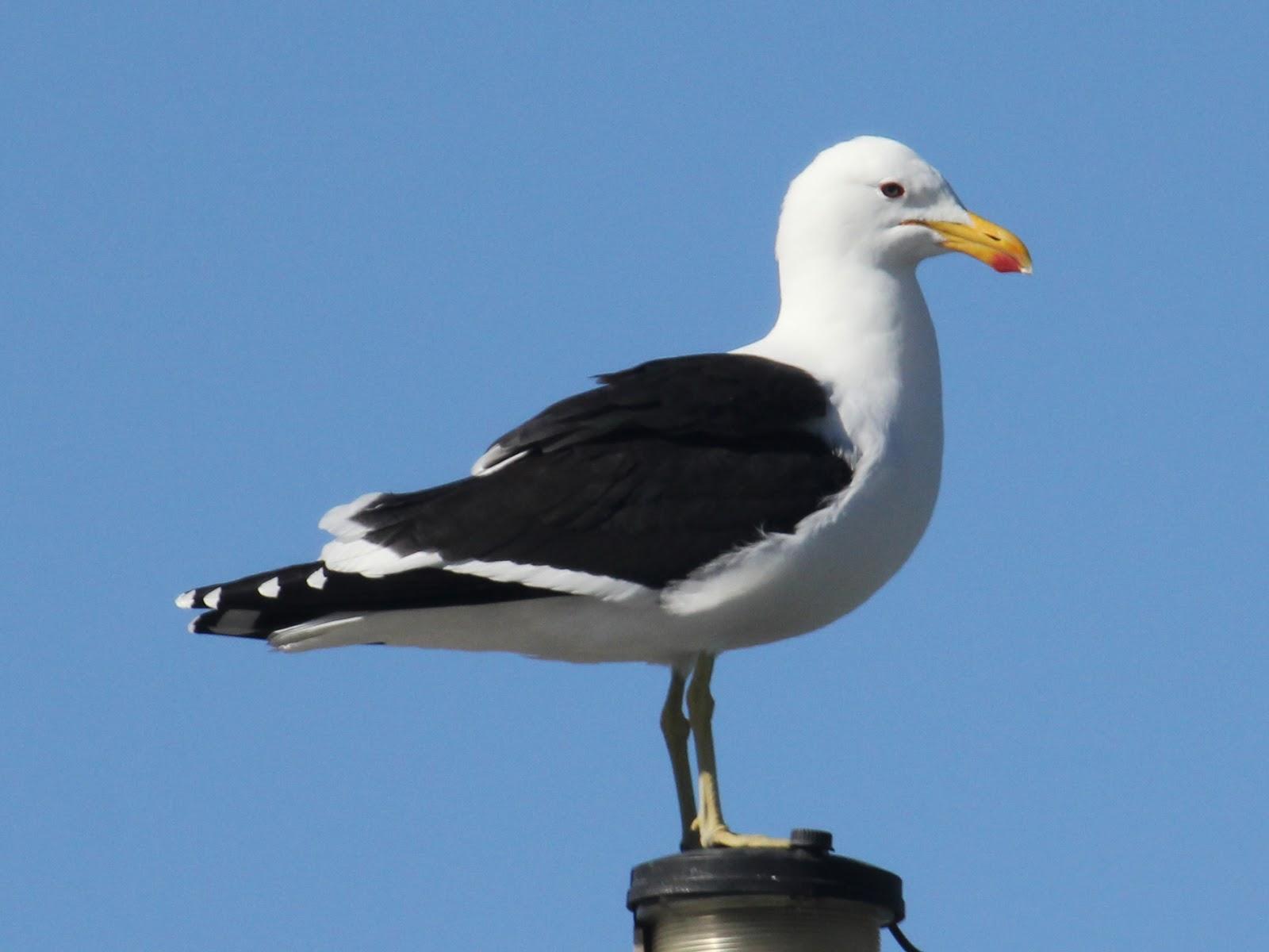 Resultado de imagen para ave marina