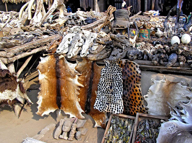 Dead animals skins on voodoo fetish market