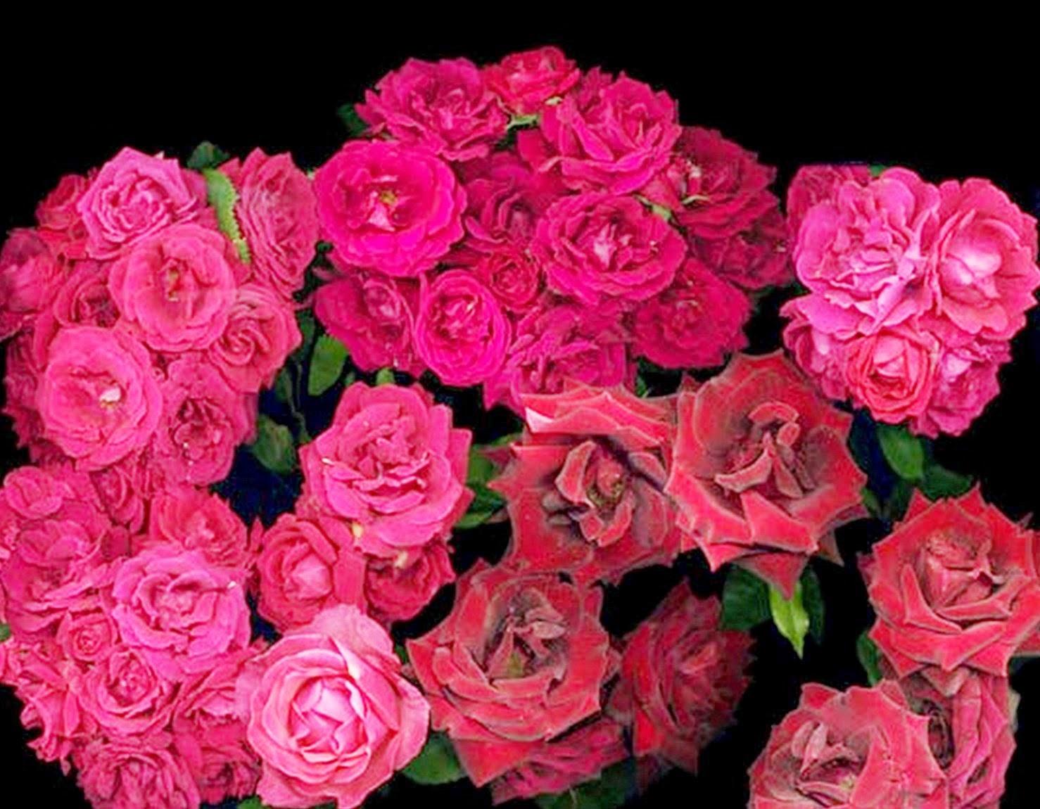 cuadros-de-flores-fotografias