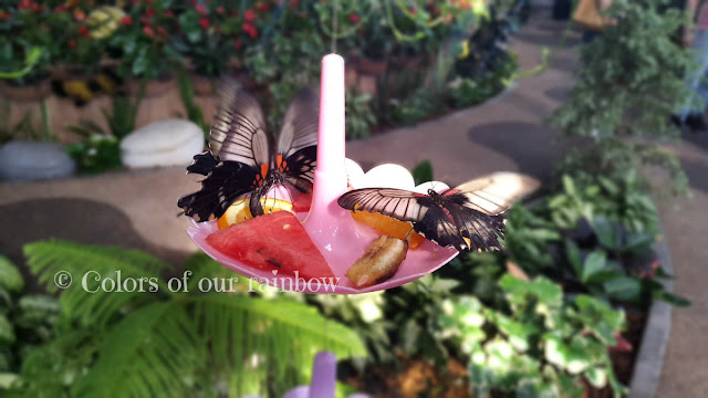 Learning About Butterflies: DUBAI BUTTERFLY GARDEN @http://colorsofourrainbow.blogspot.ae/