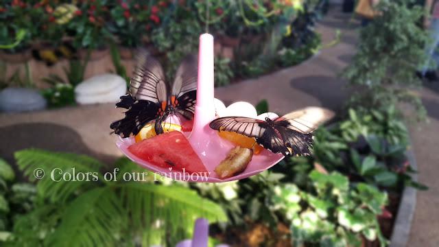 Learning About Butterflies: DUBAI BUTTERFLY GARDEN @http://colorsofourrainbow.blogspot.ae/