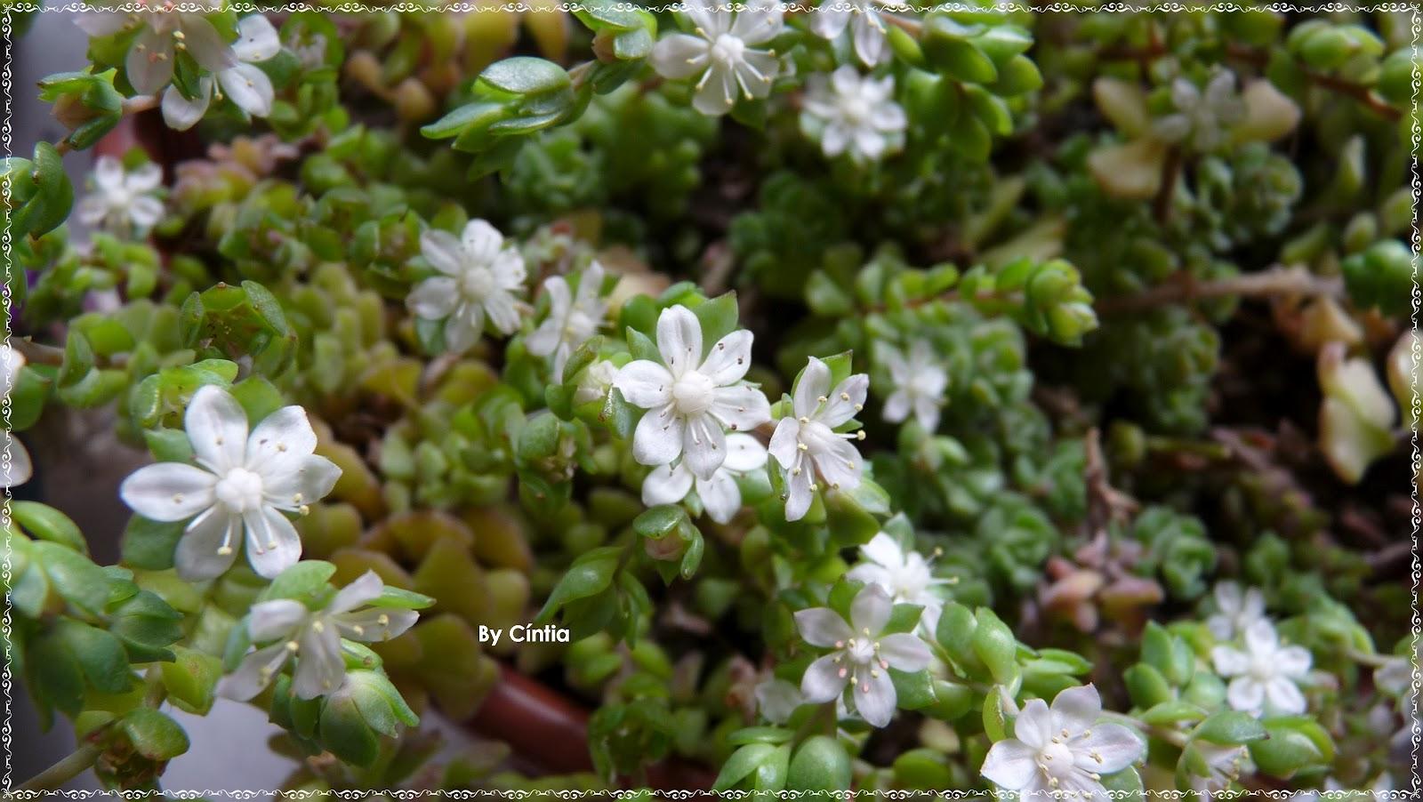 meu quintal meu jardim : meu quintal meu jardim:Porque amo meu jardim-quintal parte I – COISINHAS DA CÍNTIA