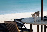 Katze auf Liegen am Strand