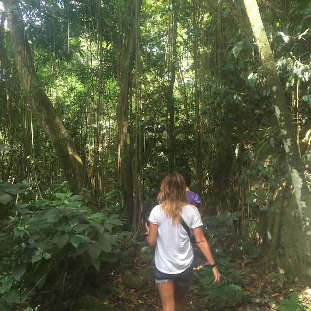 st.kitts rainforest hike