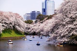 Tempat Wisata Di Tokyo - Chidorigafuchi
