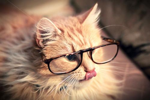 Photo drôle d'un chat avec lunette