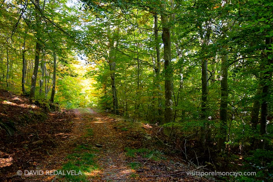 Moncayo Senderismo Ruta verde ecologistas